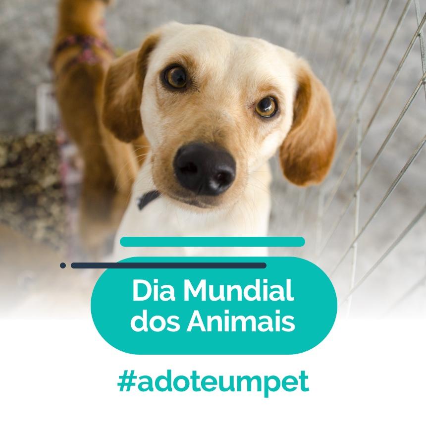 Dia Mundial dos Animais: saiba como adotar um pet e seus benefícios