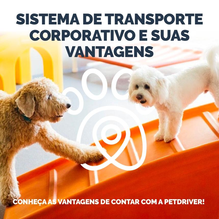 PetDriver é aliada das empresas no transporte de animais domésticos