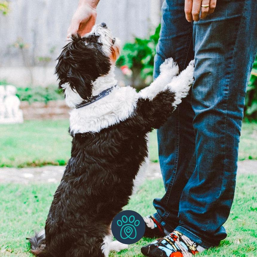Como lidar com o tédio dos pets e fazer seu cão mais feliz
