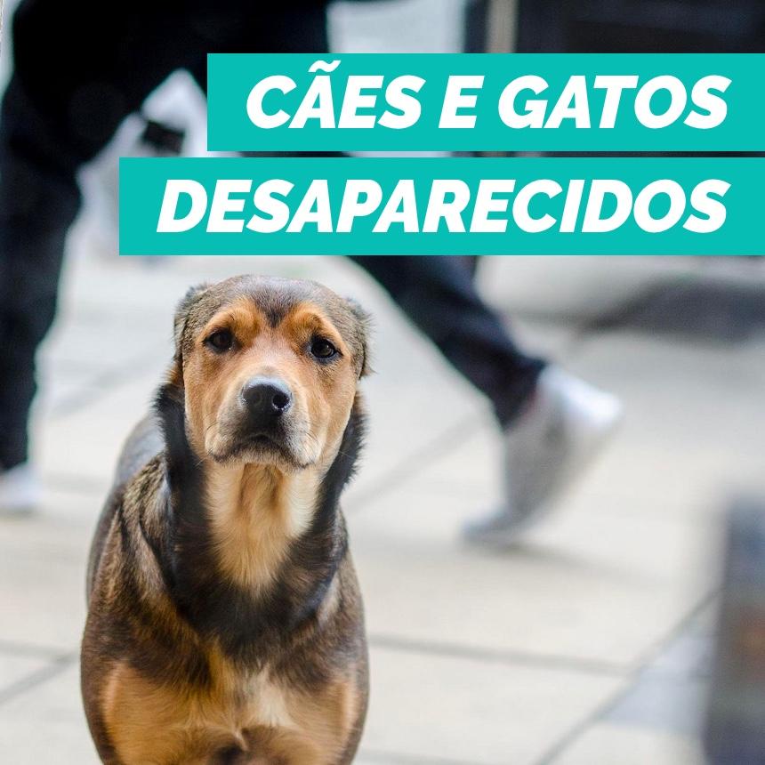 O que fazer para encontrar cães e gatos desaparecidos?