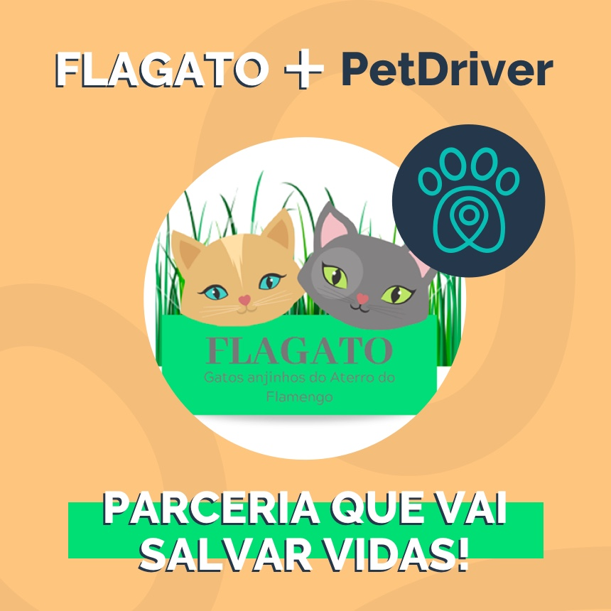 Fla.Gato e PetDriver se unem para dar melhores condições de vida a gatos de rua