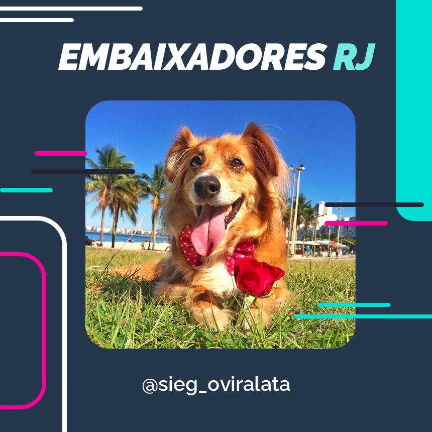 embaixador sieg_oviralata