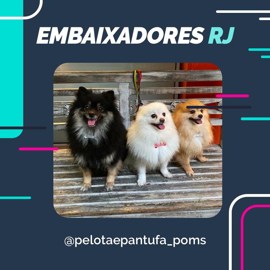 instagram-blog-post-petdriver-julho-embaixador-rj-1