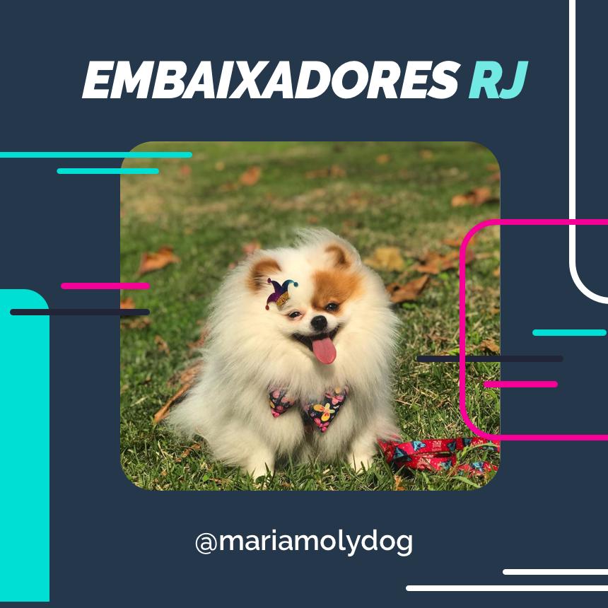 embaixador mariamolydog