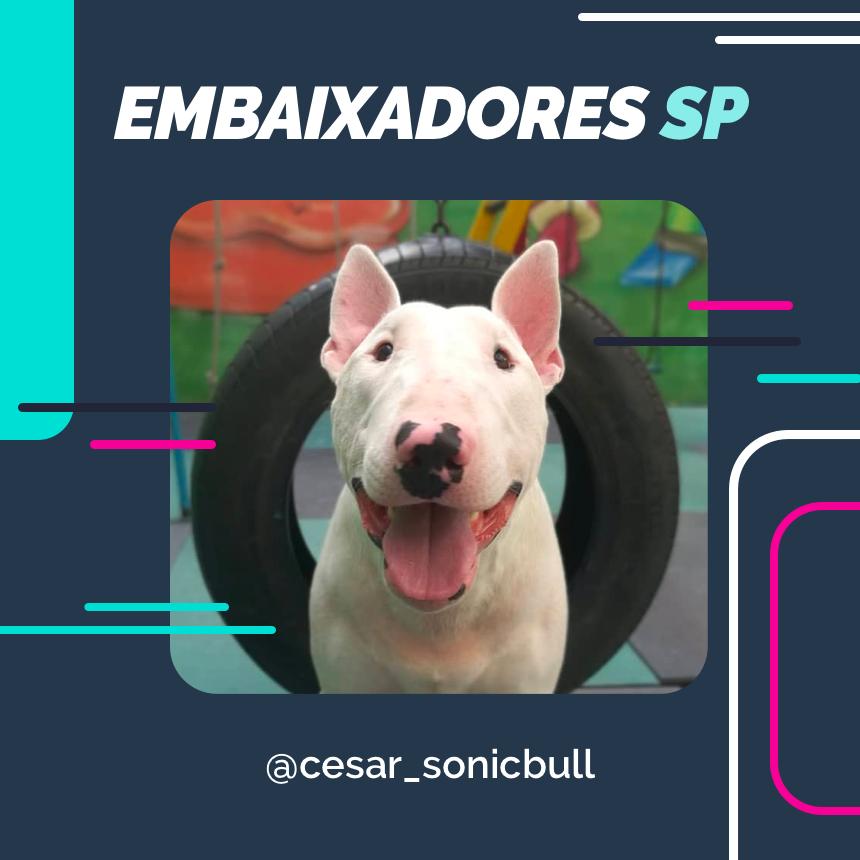 embaixador cesar_sonicbull