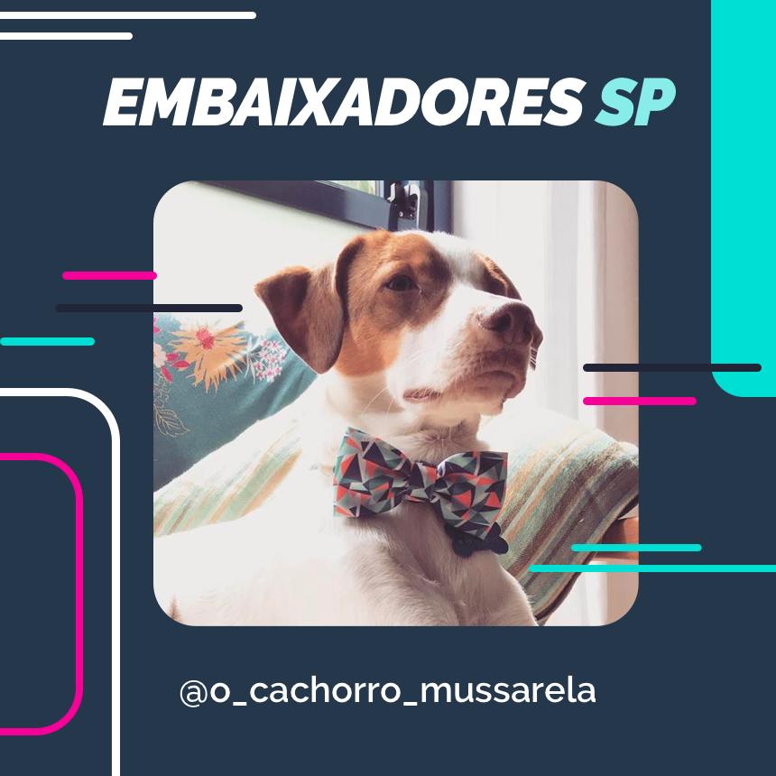 embaixador o_cachorro_mussarela