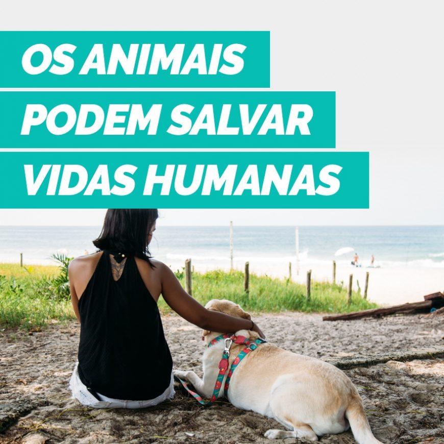Entenda como o conhecimento sobre a saúde dos animais pode salvar vidas humanas