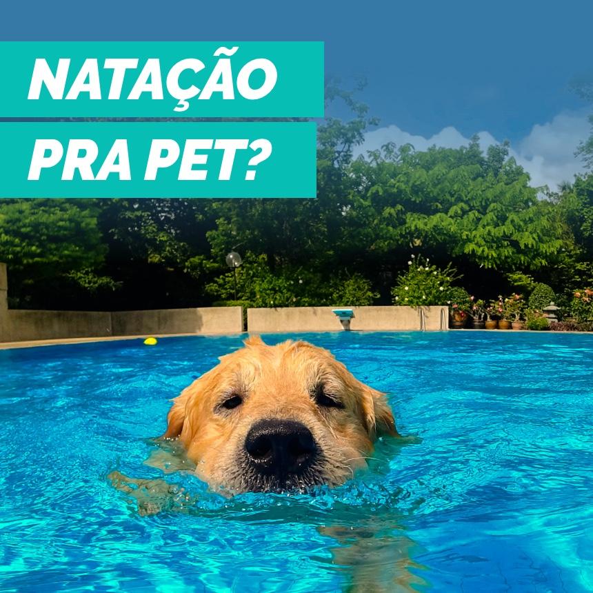Conheça os benefícios da natação para a saúde e bem-estar dos cães