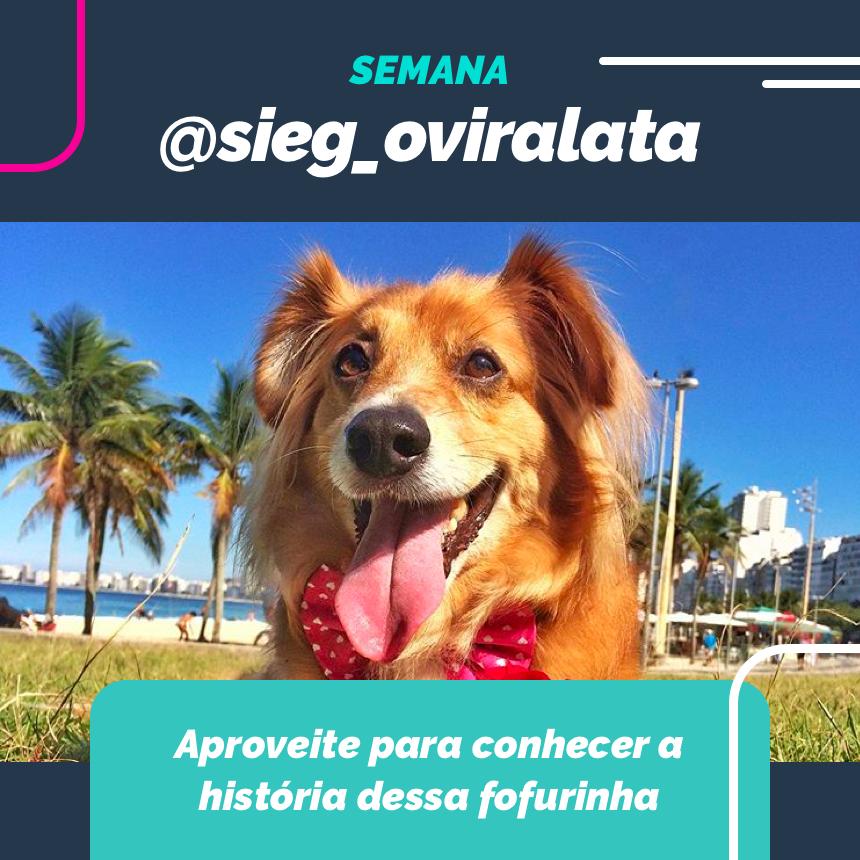 Nessa semana vamos celebrar juntos ao nosso old school @sieg_oviralata!