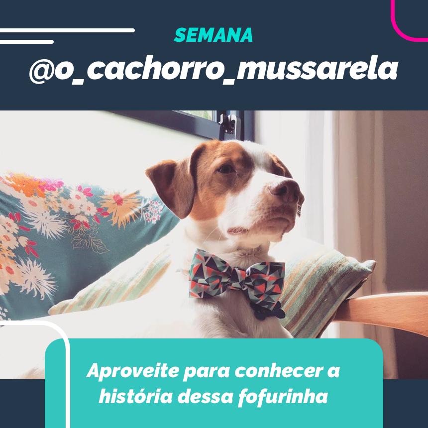 Nessa semana vamos assistir uns desenhos juntos ao @o_cachorro_mussarela!