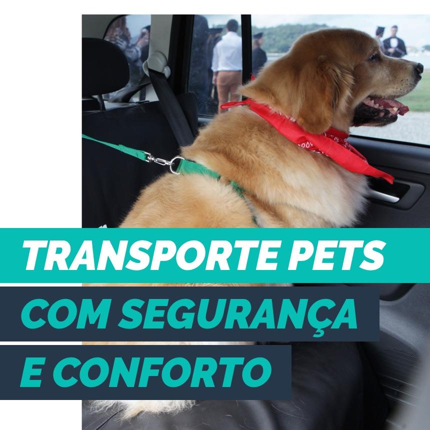 Transporte pets desacompanhados com segurança e conforto