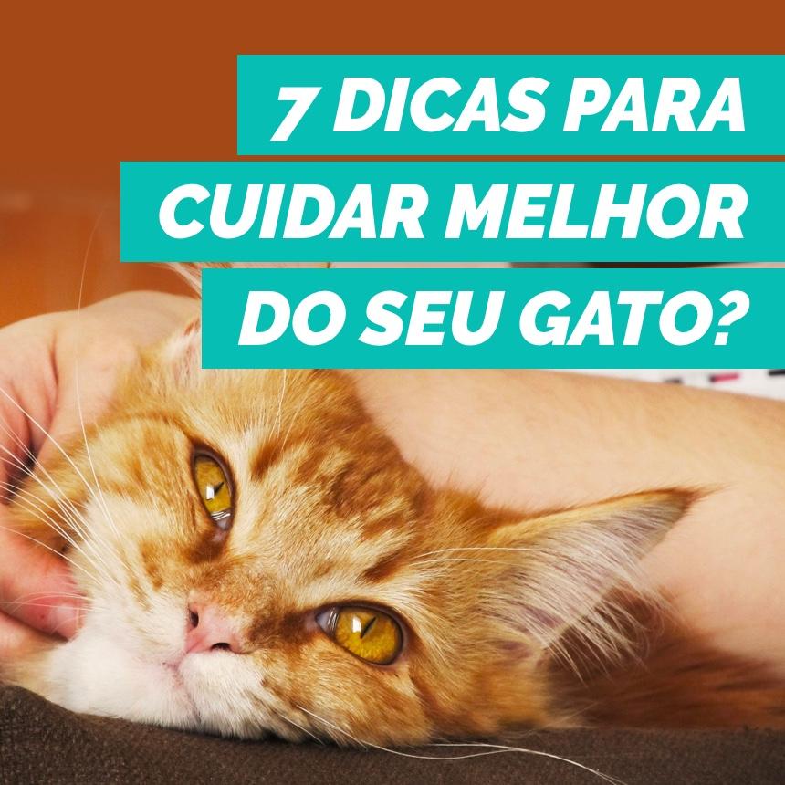 7 dicas para cuidar melhor do seu gato