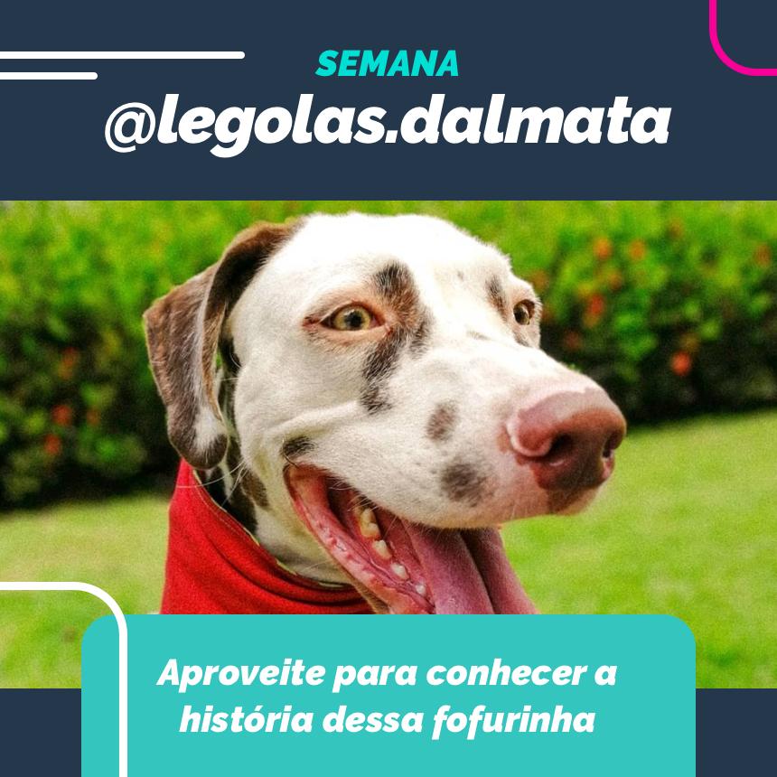 Nessa semana vamos juntos com nosso doguinho da sorte @legolas.dalmata! !