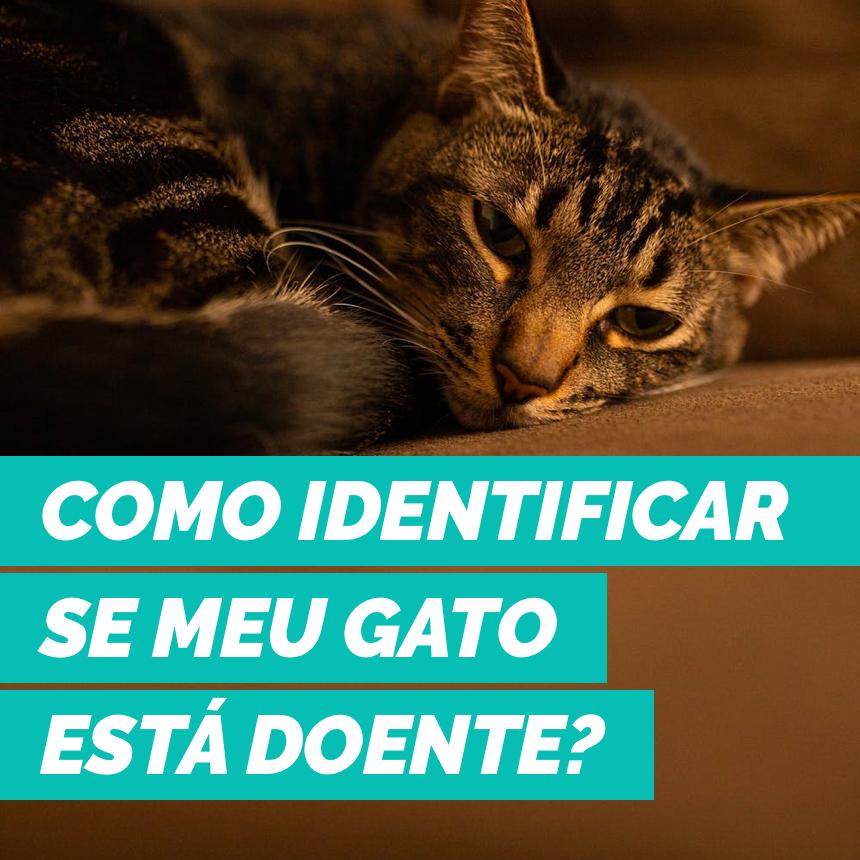 Como identificar se o meu gato está doente?