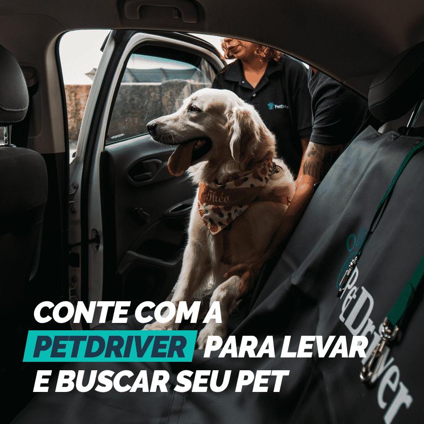 Conte com a PetDriver para levar e buscar os pets até seu estabelecimento