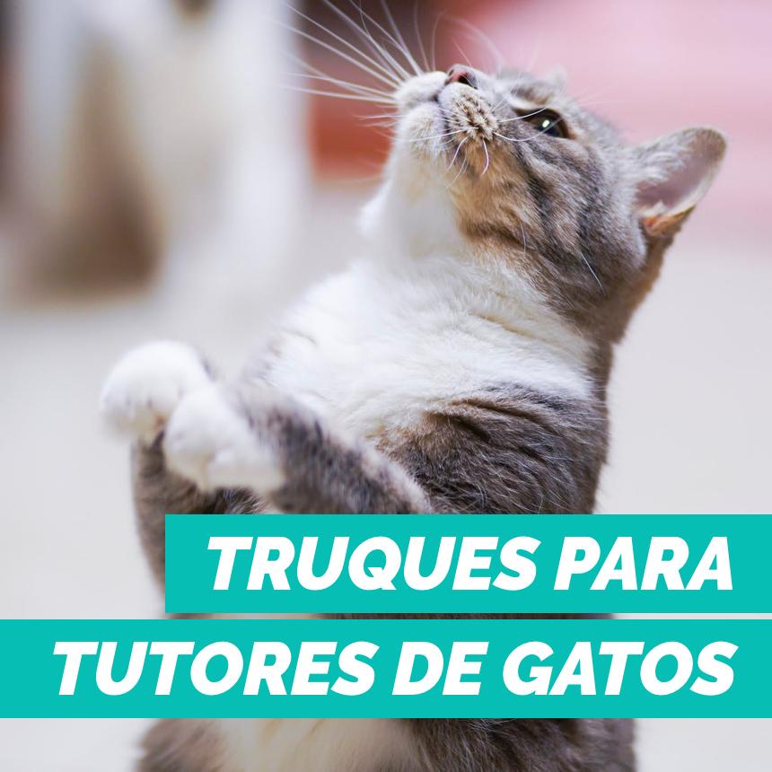 8 truques para quem tem gatos em casa