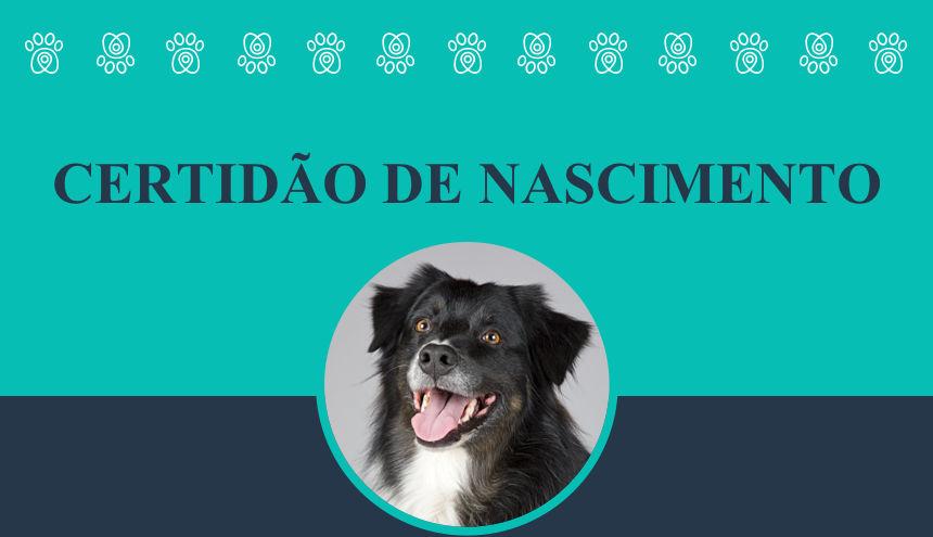 Tenha um documento gratuito que vai ajudar na identificação do seu animal de estimação