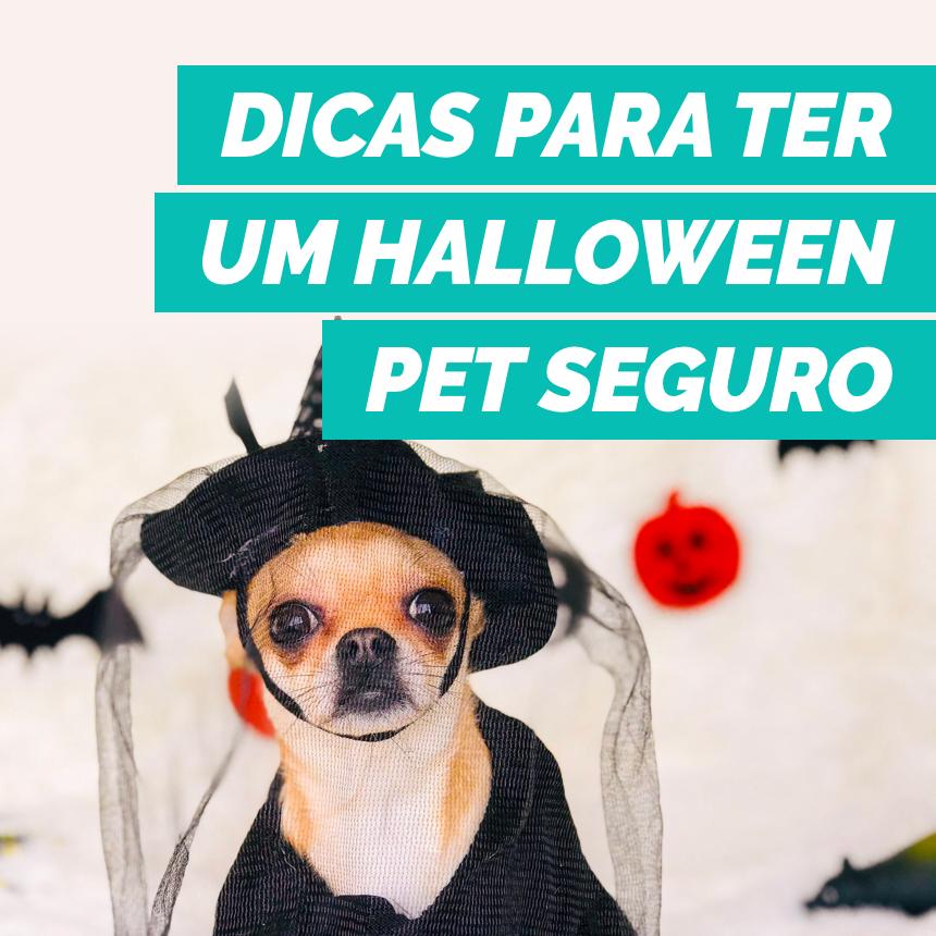 Veja como aproveitar o Halloween com o seu pet de forma segura