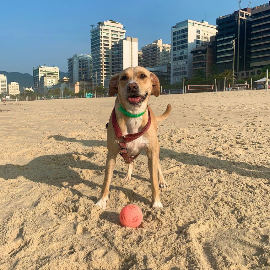 PETDRIVER_cachorreirosdapaz(02)