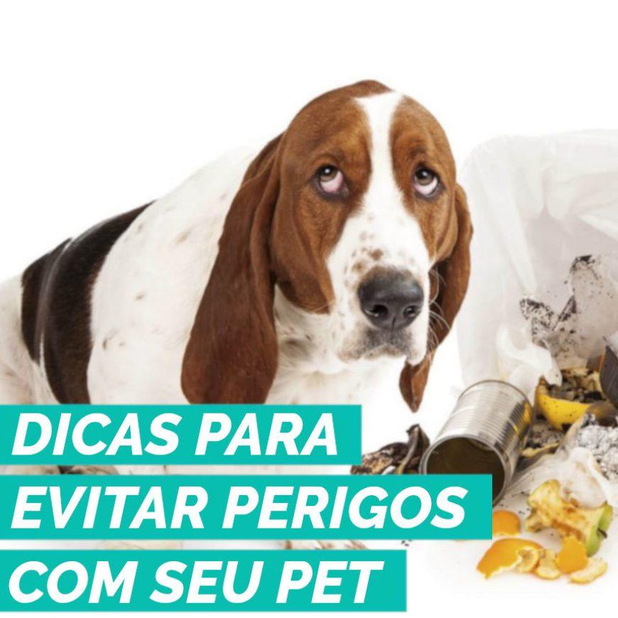 Dicas para evitar perigos relacionados com animais de estimação