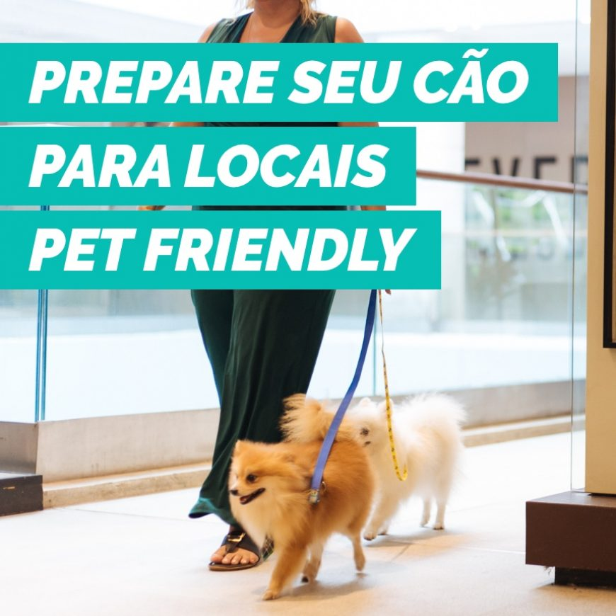 Como preparar seu pet para frequentar ambientes pet friendly