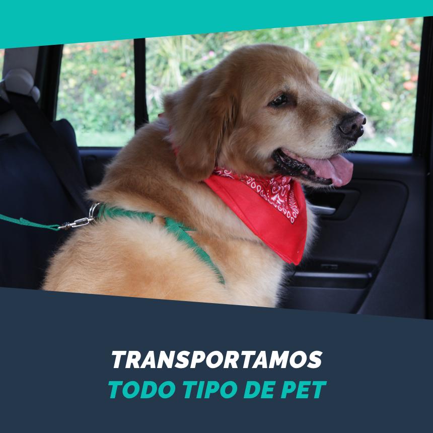 A PetDriver transporta todos os tipos de animais de estimação