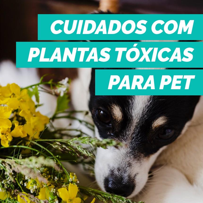 Conheça espécies de plantas tóxicas para os pets e previna acidentes