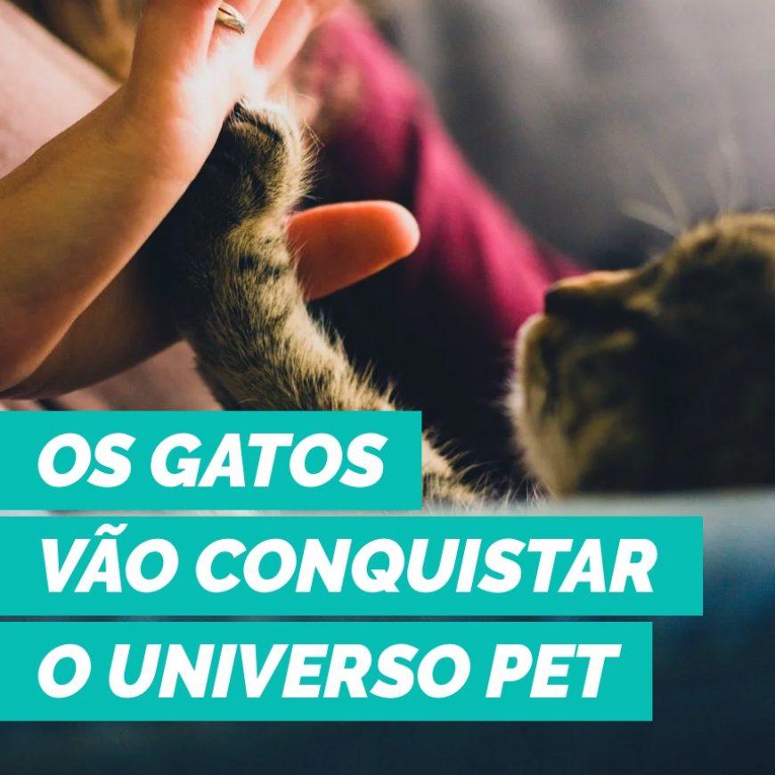 Os gatos vão conquistar o universo pet e o Brasil também