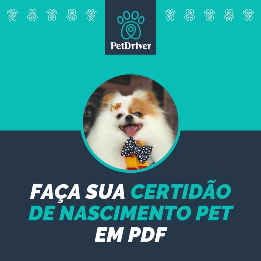 Certidão de Nascimento Pet : registre o seu animal de estimação