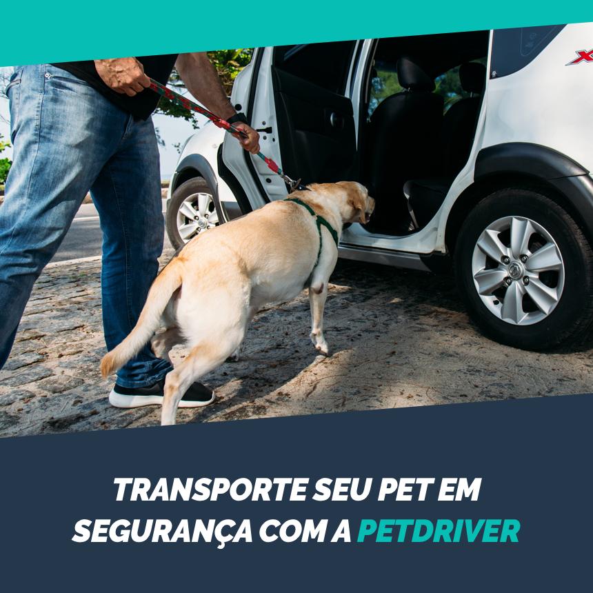 Transporte seu pet em segurança com a PetDriver