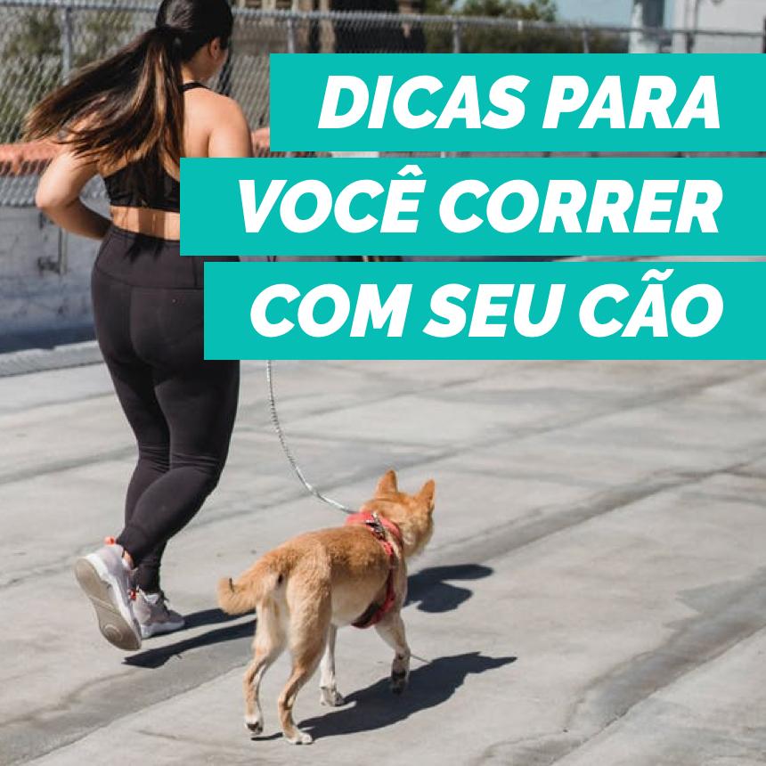 Dicas para praticar corrida com o seu cachorro