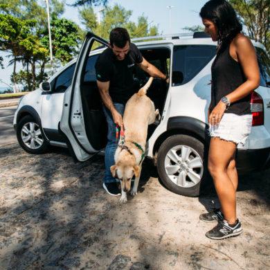 Transporte pet: saiba onde você e seu pet podem ir de PetDriver