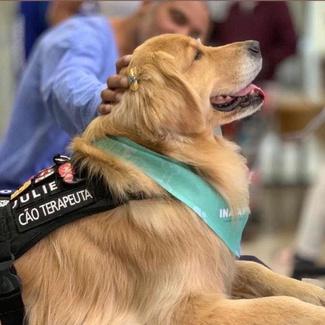 Terapia Assistida por Animais: como cães podem se tornar coterapeutas e trazer benefícios aos pacientes