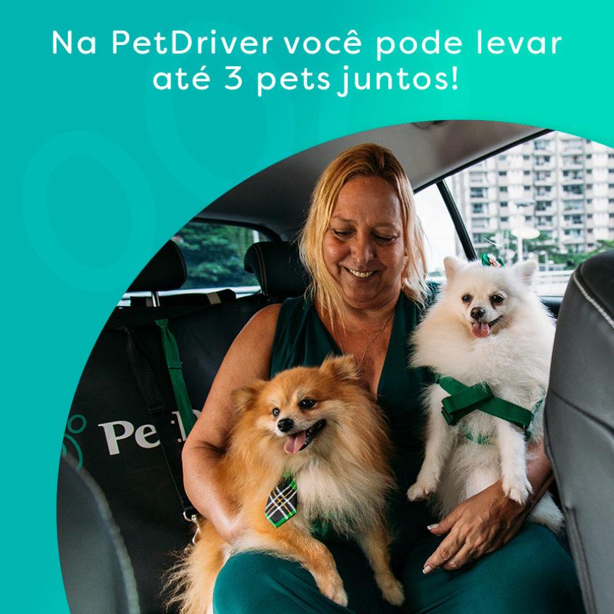 Transporte pet: viaje com até 3 animais de estimação de uma só vez com a PetDriver