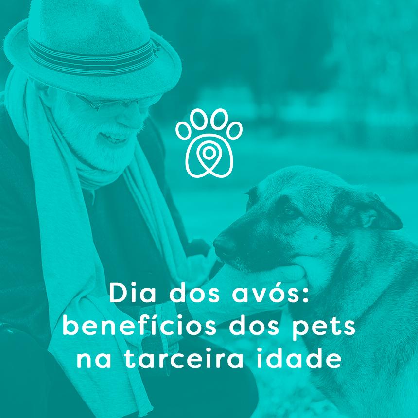 Dia dos Avós: benefícios dos pets para a terceira idade