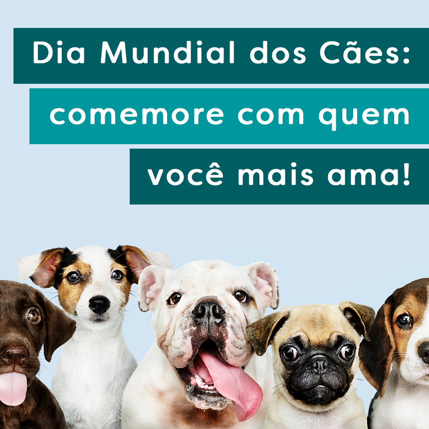 Dia Mundial dos Cães: comemore com o seu melhor amigo e cuide dele com carinho