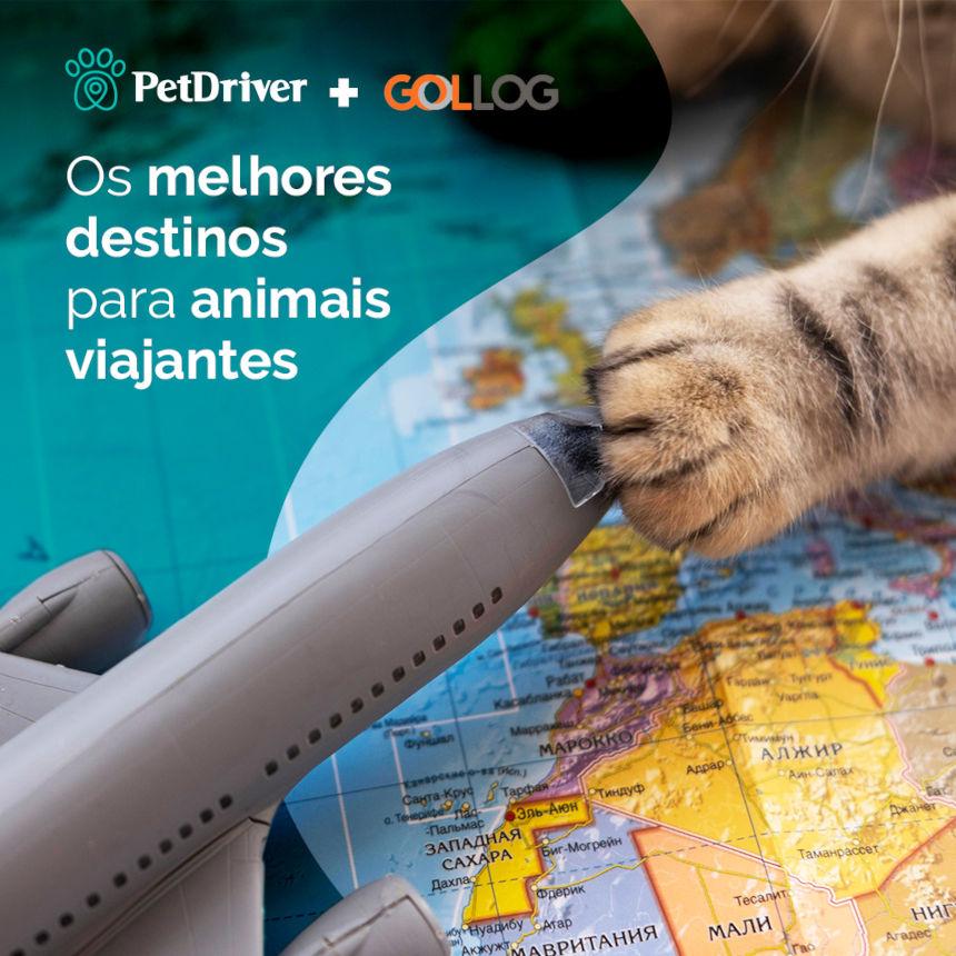 Os melhores destinos para animais viajantes
