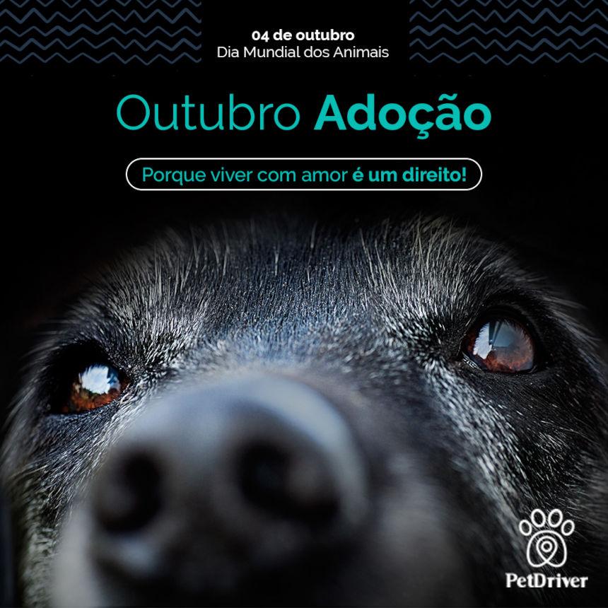 Dia Mundial de adoção de animais